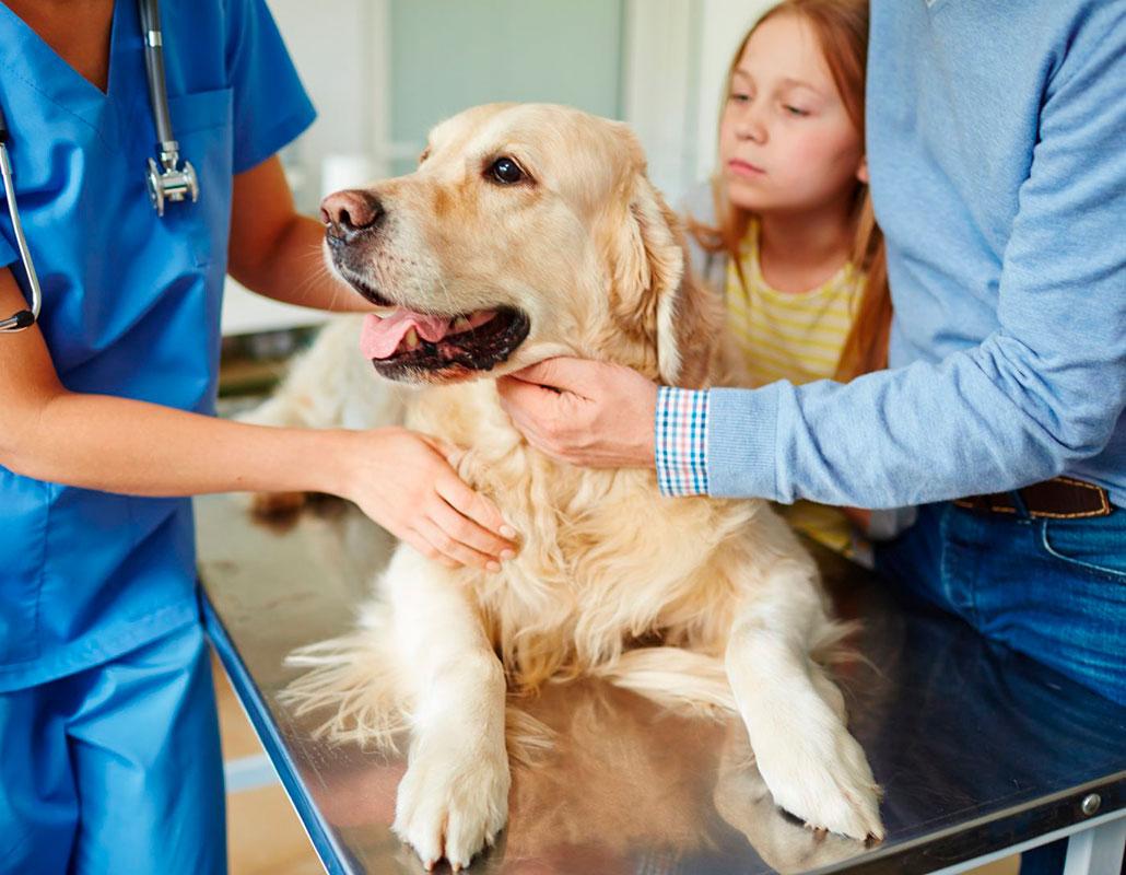 Вызов ветеринара